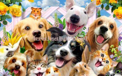 Przedszkolaki pomagają zwierzakom – podziękowanie za udział w zbiórce